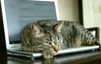 cat-on-laptop-catnap